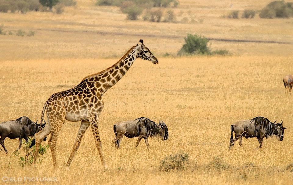 Immerse Yourself into an African Adventure - Tanzania Photography Safari! (November 2018)